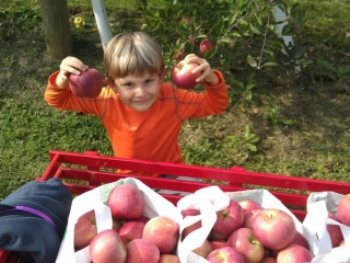 Child apple picking and holding up two red gala apples after picking at Grim's Greenhouse