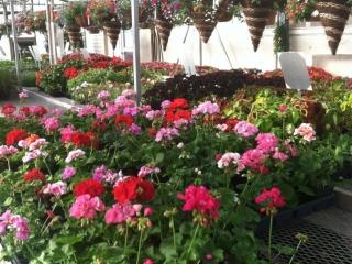 greenhouse flowers