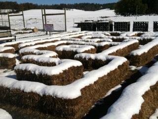 snowy hay maze