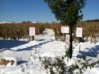 snow-covered orchard