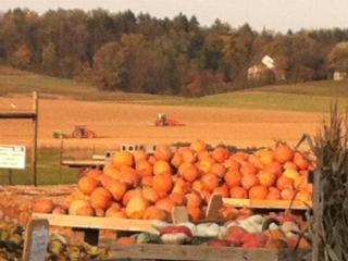 pumpkin piles