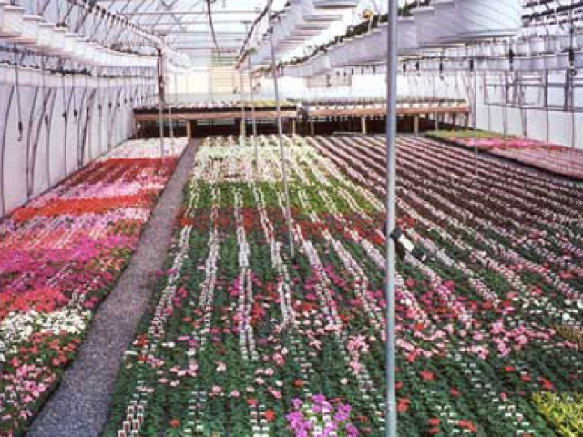 rows and rows of flowers