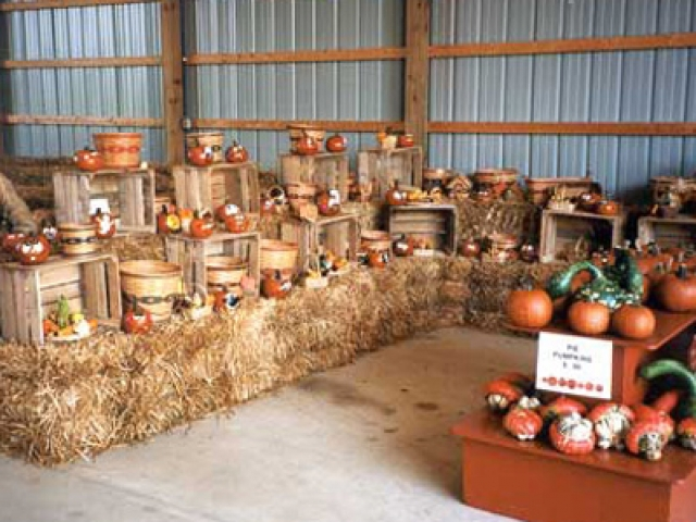 Grim's Greenhouse pumpkin display in shop, family orchard Breinigsville pa, family orchard allentown pa, family orchard bethlehem pa, corn maze Breinigsville pa, corn maze allentown pa, corn maze bethlehem pa, pumpkin picking Breinigsville pa, pumpkin picking allentown pa, pumpkin picking bethlehem pa, apple picking Breinigsville pa, apple picking allentown pa, apple picking bethlehem pa, hay rides Breinigsville pa, hay rides allentown pa, hay rides bethlehem pa, apple orchard Breinigsville pa, apple orchard allentown pa, apple orchard bethlehem pa
