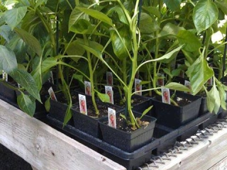 Grim's Greenhouse plants